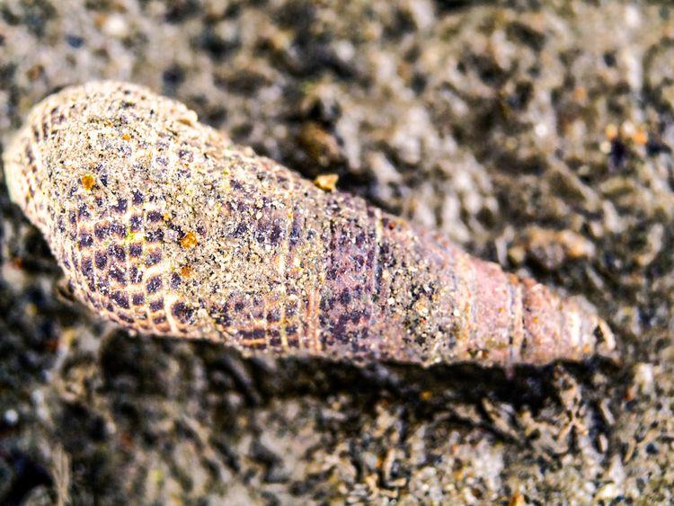 photo snail beach - animals, macrophoto - ke7dbx   ello