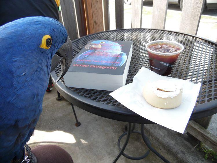 Parrot, Coffee, Cinnamon Roll E - michaelostrogorsky | ello
