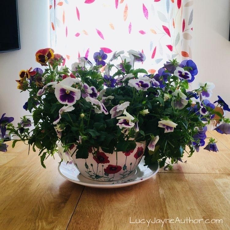 Pansies giant teacup, love kitc - lucyjayne | ello