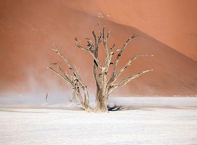Namib Desert - Africa, Namibia, Landscape - aga_szydlik | ello
