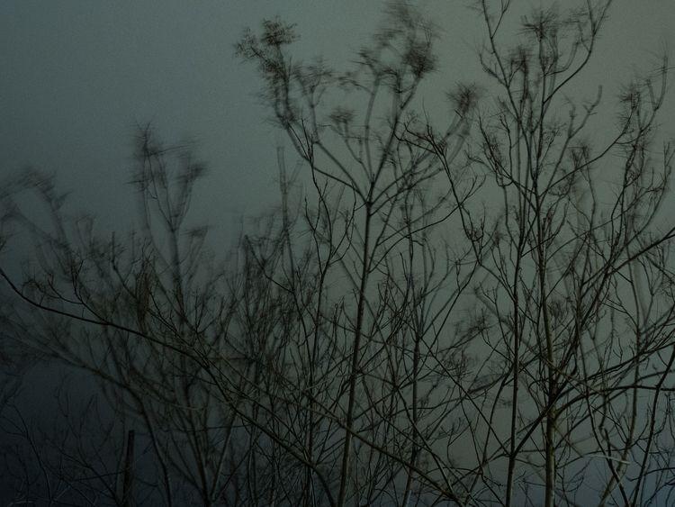 longexposure, photography, trees - philip_tsemperis | ello