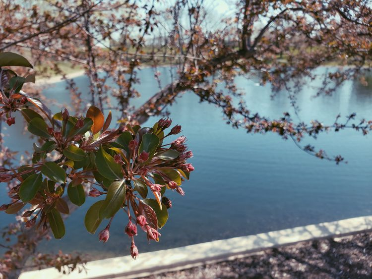 nature, floral, flowers, blooming - alexianart | ello