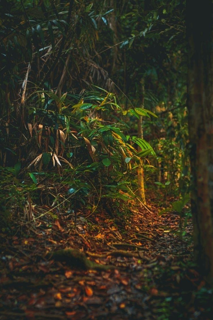 jungle, hot...  - asia, nature, outdoors - fokality | ello