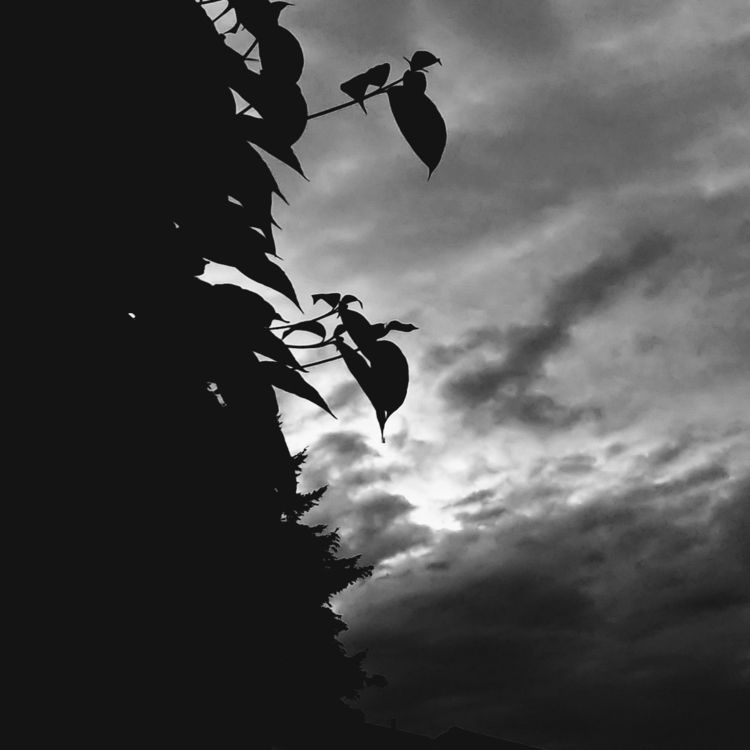 Silhouette - blancinegre, monochrome - saysaphotography | ello