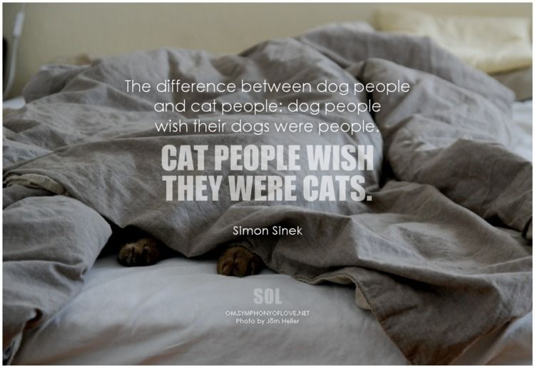 difference dog people cat peopl - symphonyoflove | ello