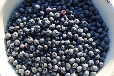 week picked pounds blueberries  - ejfern28 | ello