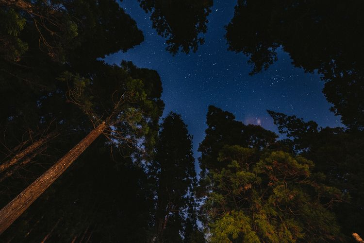 stars, forrest, japan, koyasan - daniel_ordelt | ello