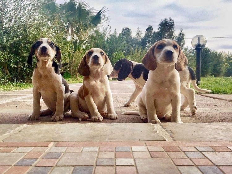 babydogs - _lamelons | ello