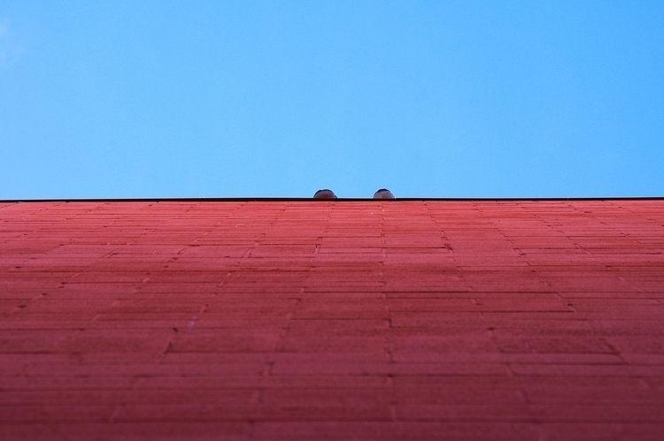 Pigeon Breasts - meat, pigeons, minimal - jeff_day | ello