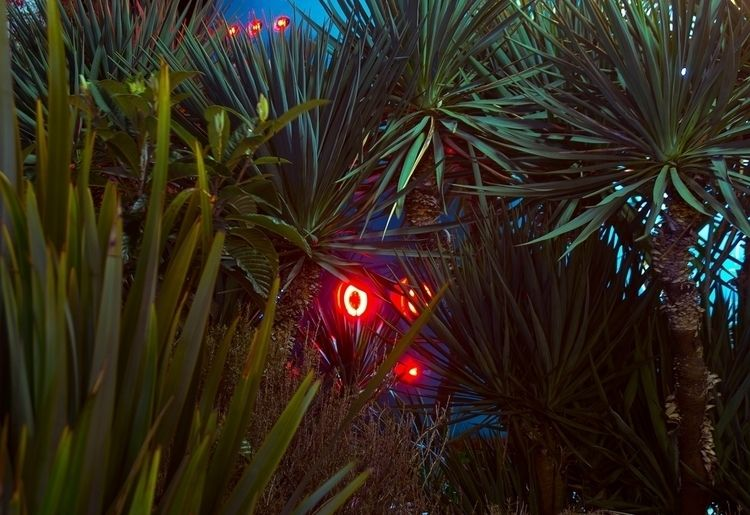 NEON NIGHT - PLANTS, PALMS, PALMTREES - thisset | ello