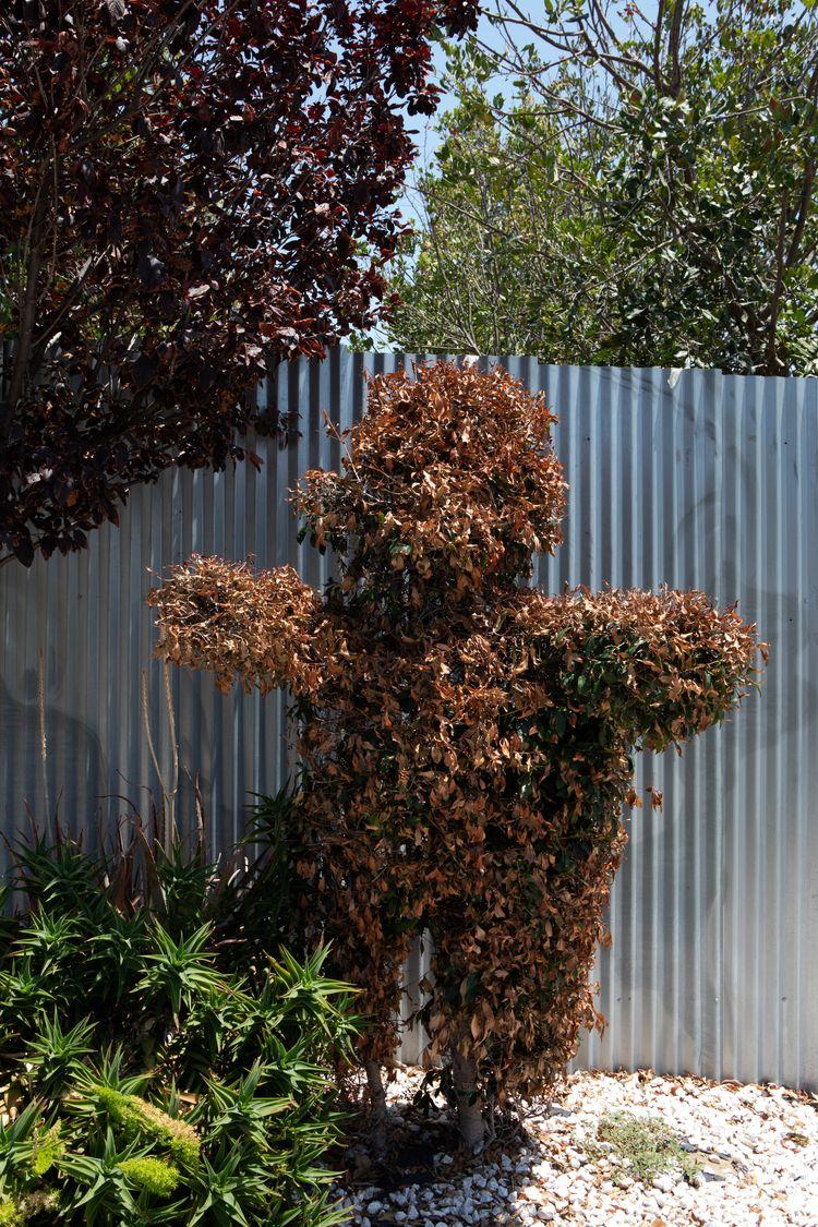 Toasted Topiary Teddy, Glendale - odouglas | ello