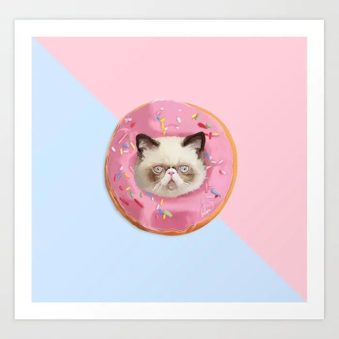Persian Cat Strawberry Donut -  - lostanaw | ello