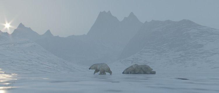 'Polar Bear - coronarenderer, cinema4d - bengaminjerrems | ello