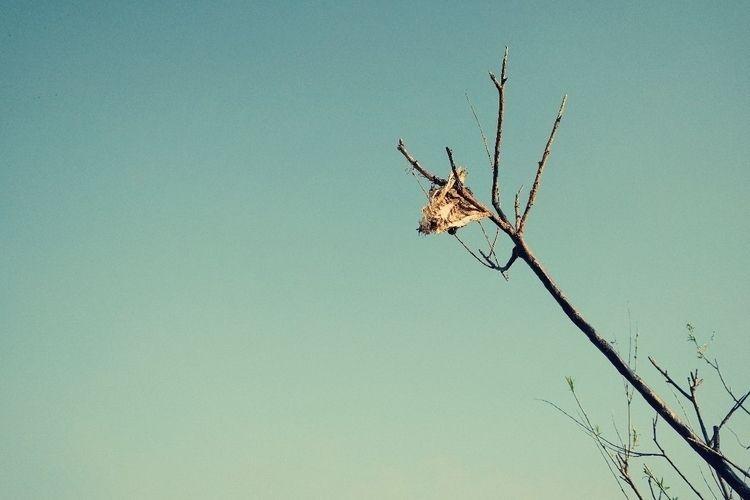 bones - oblepiha | ello
