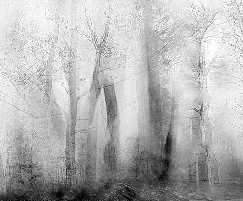 fog, textures, tree, forest - voiceofsf | ello