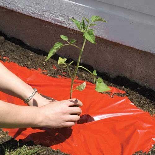 Red Mulch Film Tomato Strawberr - henan-yinfeng | ello
