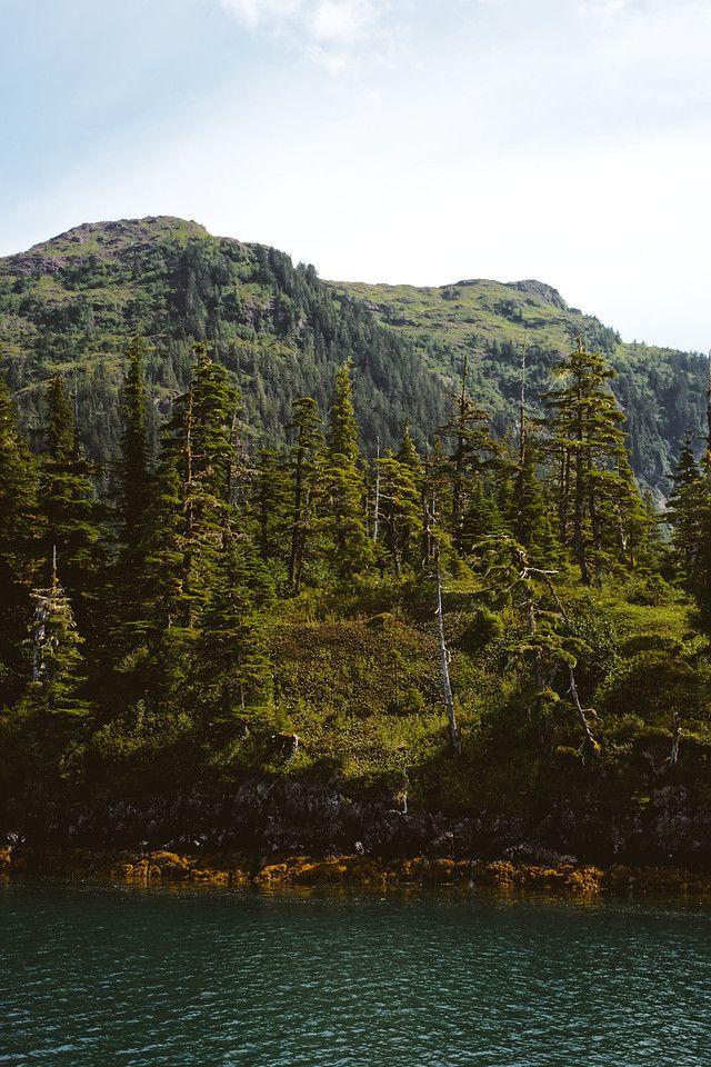 Chugach Mountains - Rocky fores - lwpetersen   ello