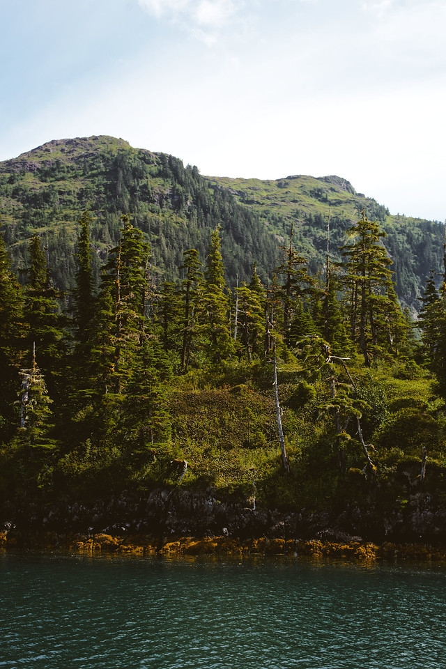 Chugach Mountains - Rocky fores - lwpetersen | ello