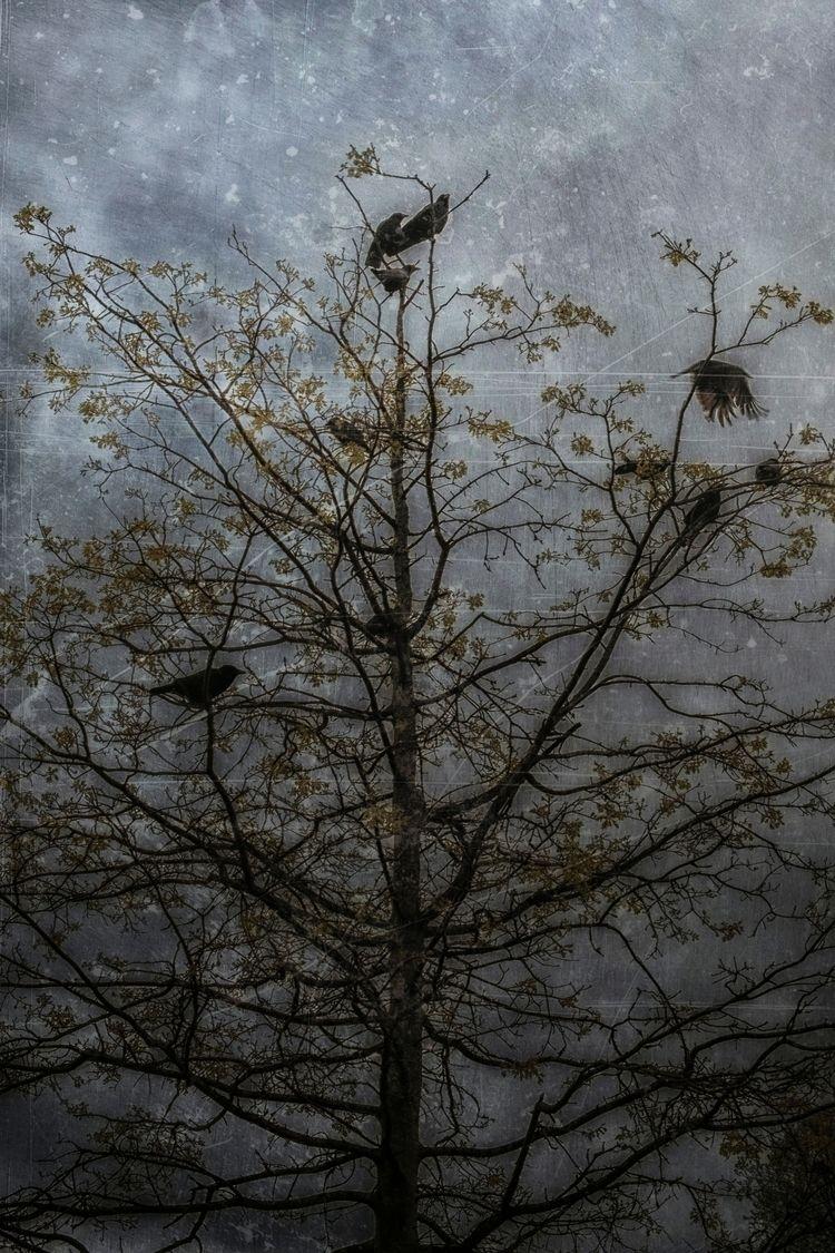 stary moonless night - artphotography - urbanart | ello