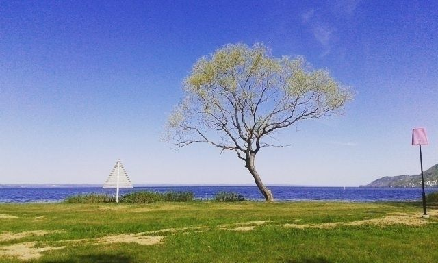 1 Tree South Wättern.se MidDay  - mellyrn | ello