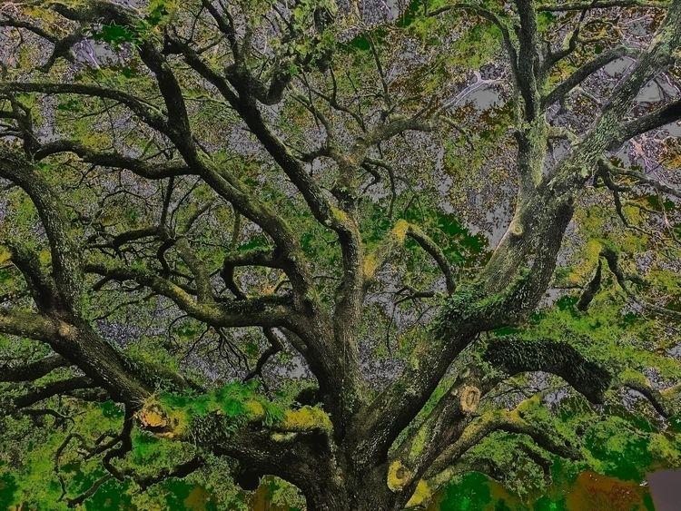 rooted ~2016 _ Wilmington, Nort - wellcaldmax | ello