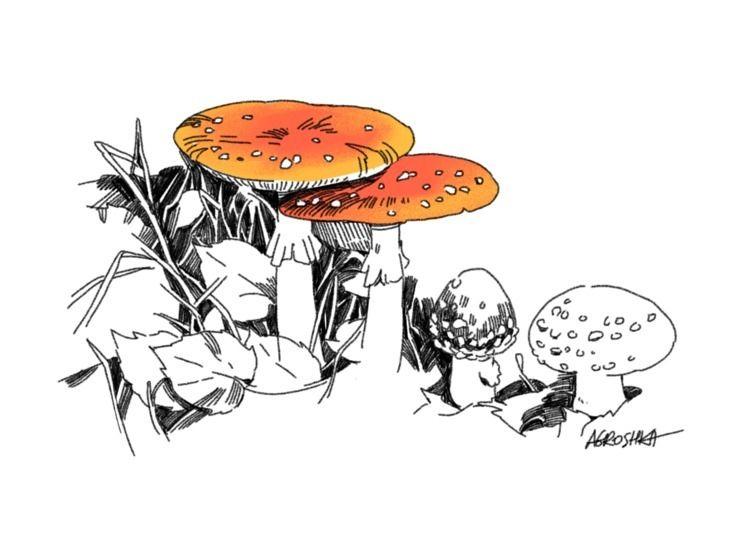 mushroom, fungi, drawing - agroshka | ello
