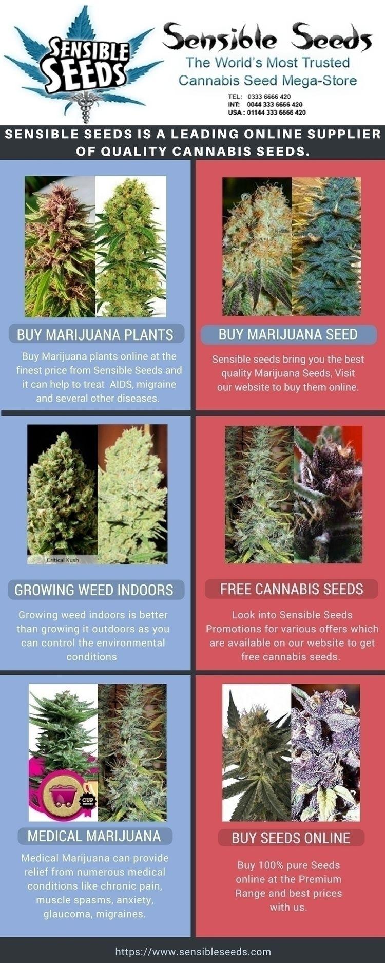 buy marijuana plants online che - sensibleseeds | ello