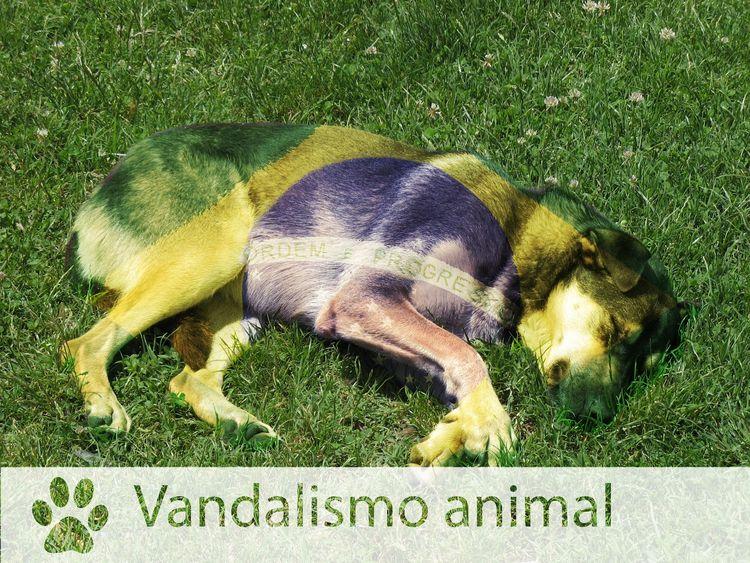 Vandalismo Animal - alpha overl - lucas_bandrade | ello