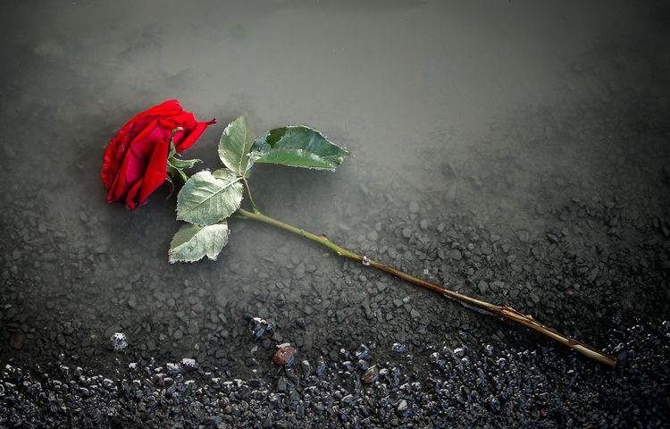 Discarded love - bradverts | ello