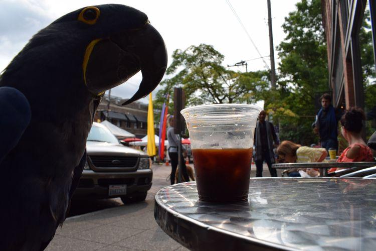 Life Parrot Coffee. Sitting Hya - michaelostrogorsky | ello