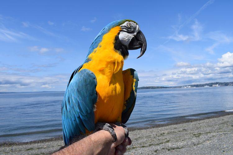 Portrait Parrot. Blue Gold Maca - michaelostrogorsky   ello