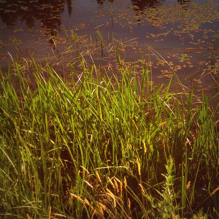 Pond - photography, pond, marsh - dispel | ello