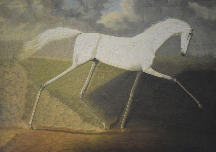Sawrey Gilpin, 16.5 11.5 - horse - loladupre   ello