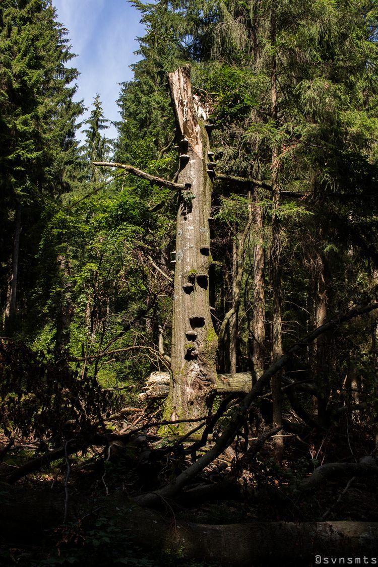 Standing - austria, aigen, tree - svnsmts | ello