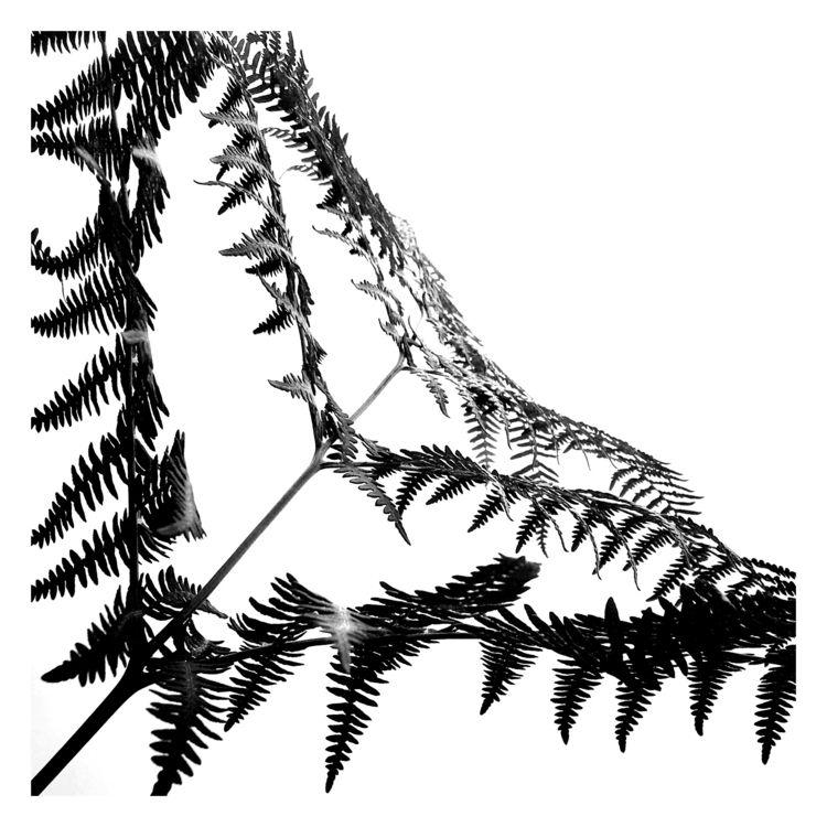 fly  - fern, plant, nature, bw, blackandwhite - thijstennekes | ello