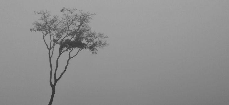 solitude, loneliness, silence - duenhas | ello