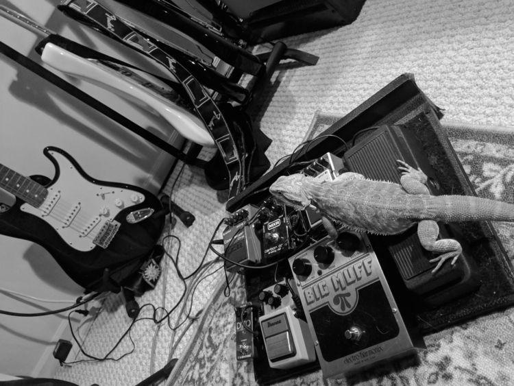 Dragons, loves music (gear - BeardedDragon - petersabbagh | ello