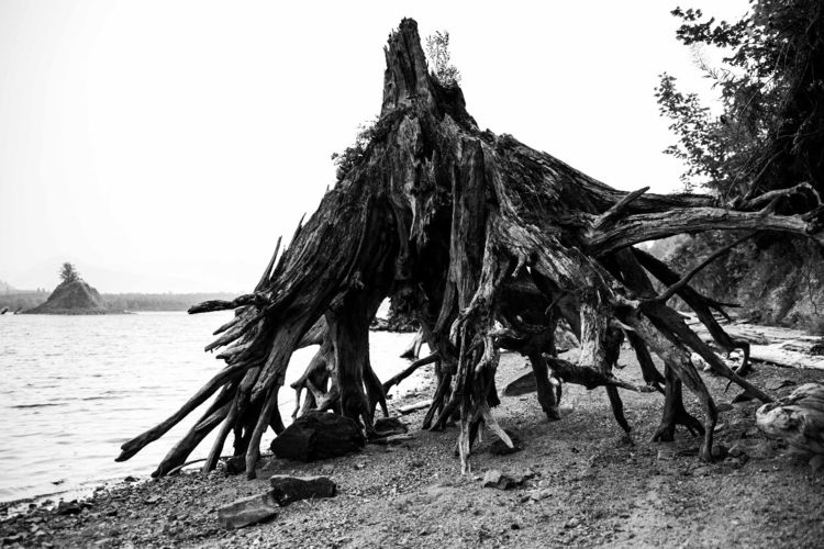 Lake Monster - blackandwhite, landscape - illuminationsfromtheattic | ello