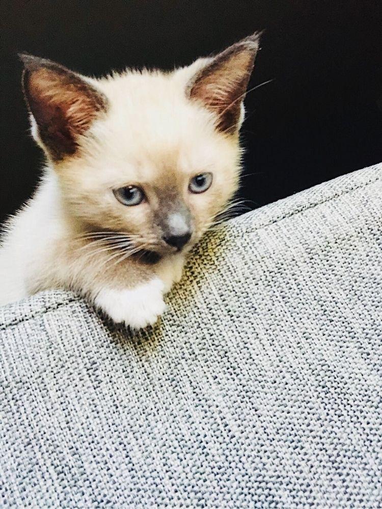 Meow - manidots   ello