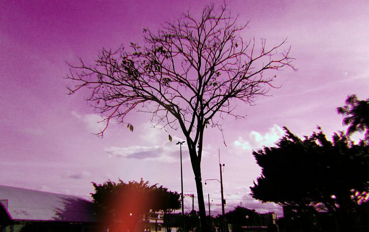 photography, photo, pics, tree - lucasamorim_ | ello