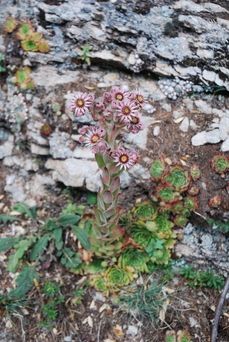 fleurs dans les roches - abigailduval | ello
