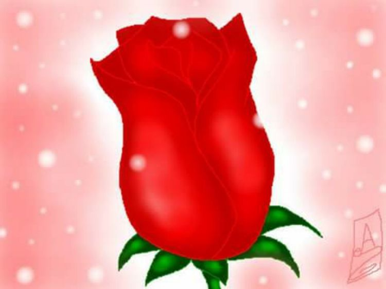 mi amada rosa bookdraw-saga adr - bookdrawsaga | ello