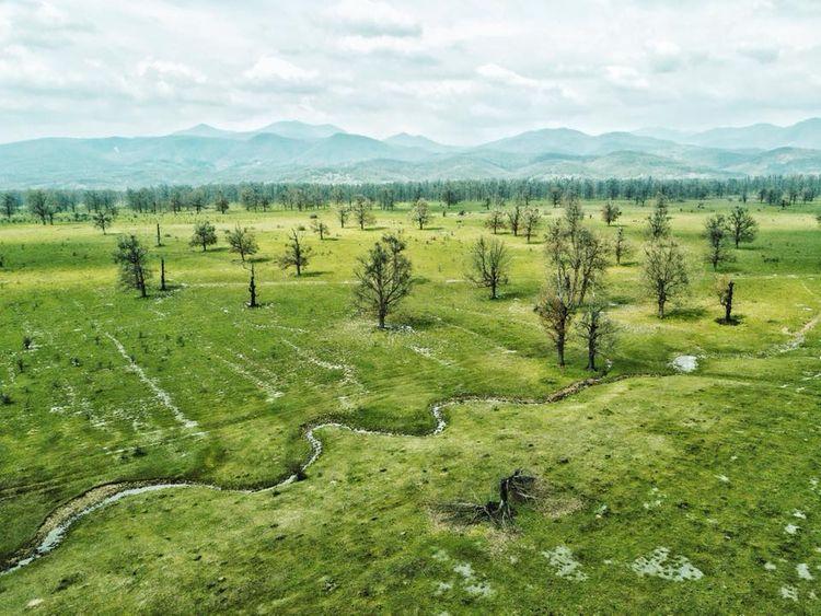 green, aerial, spring, trees - dragosmalaescu | ello