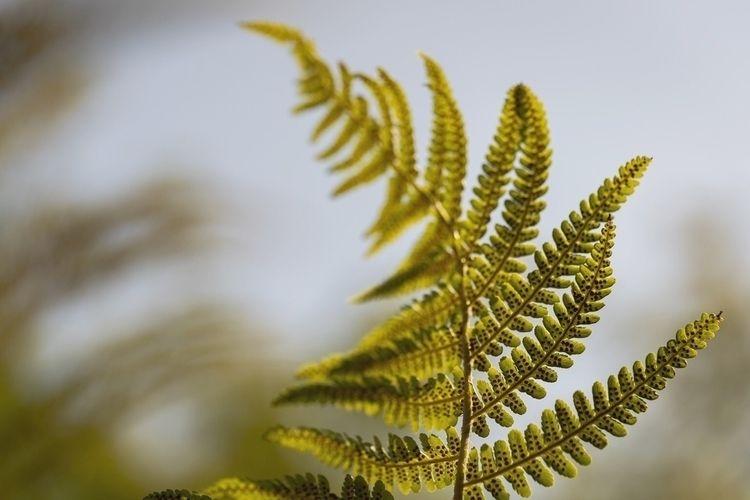 autumn begins - fotoblubb | ello
