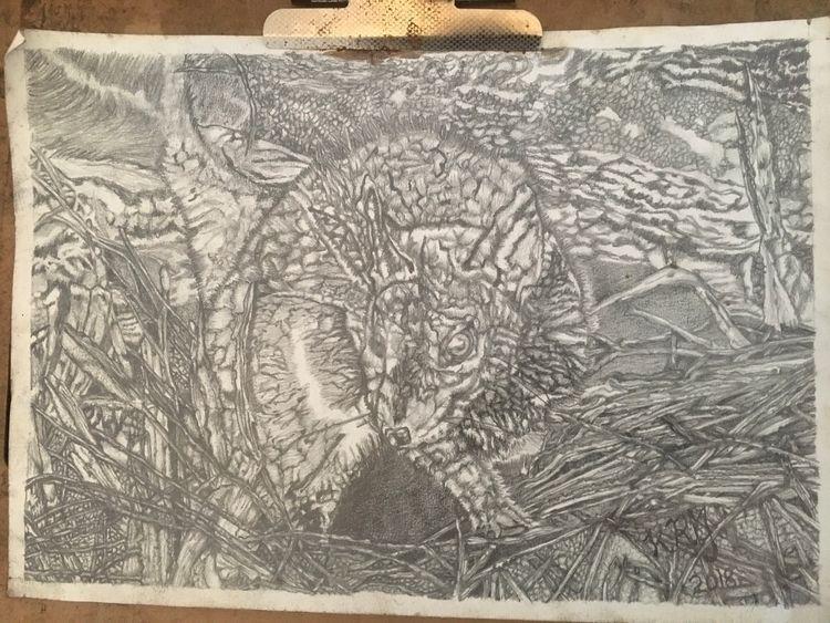 whittling graphite Phascogale;  - krickenwood | ello