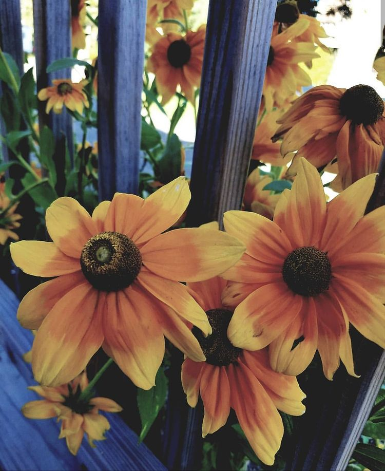 Enjoying days Summer - Maine, flower - natureisfree   ello
