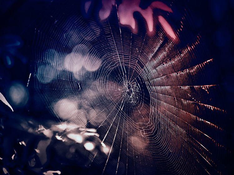 SpiderWeb - zabya   ello
