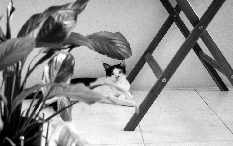 flower, cat, film, analog, ilfordFP4 - russadasvendas | ello