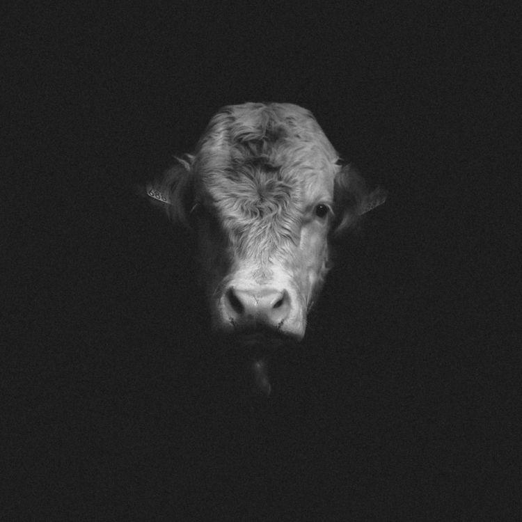 animals, blackandwhite, dark - klaasphoto | ello