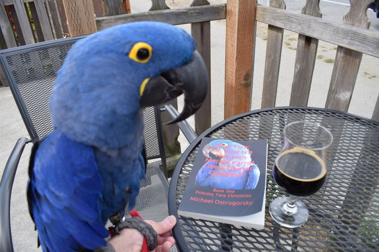 Happy Hyacinth Macaw Princess T - michaelostrogorsky | ello